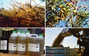 Cal Tinons productes ecologics