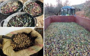 Can Cruset Agroturisme olives i ametlles
