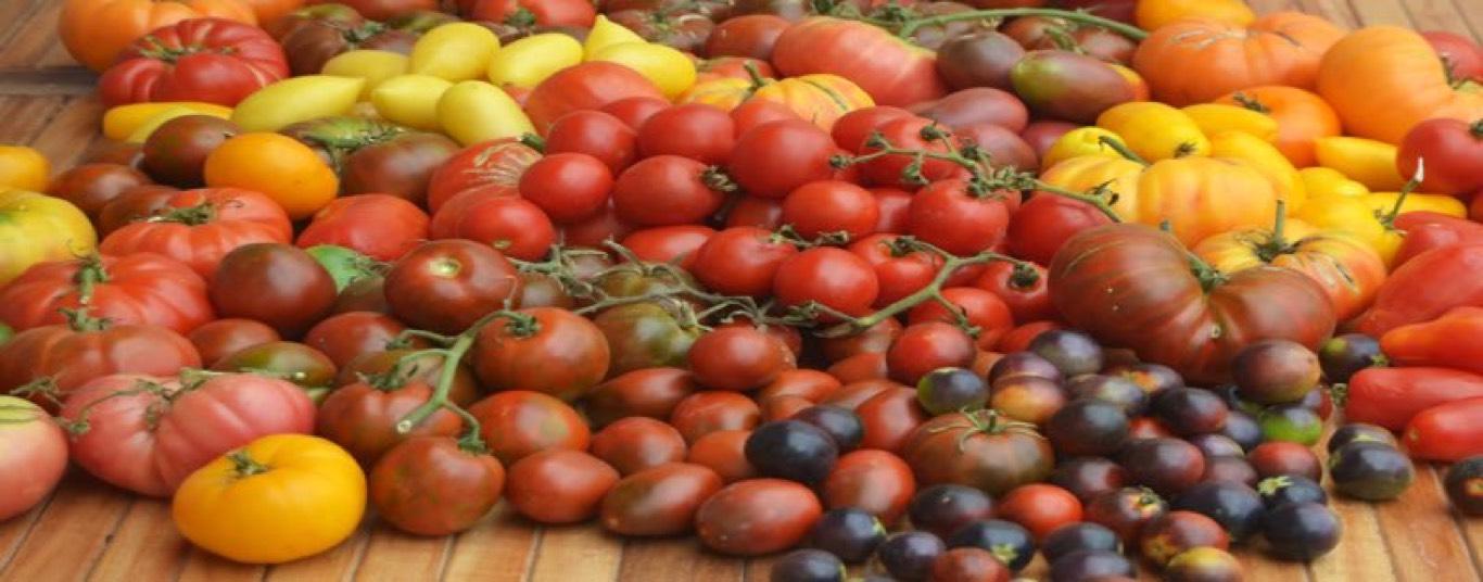 Stephen le Foll tomates en enero