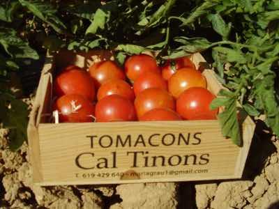 Tomaquets ecologics cal tinons