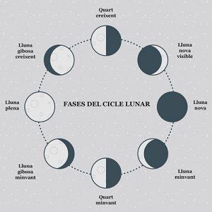 Fases ciclo lunar