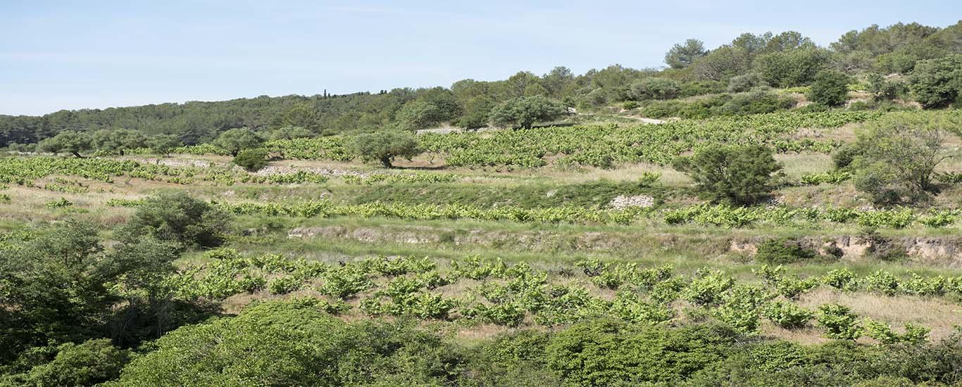 Bodega Entre Vinyes