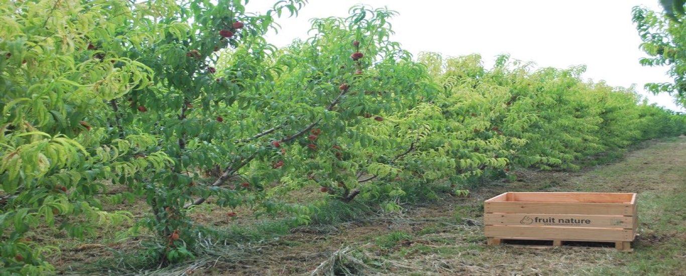 Fruit Nature