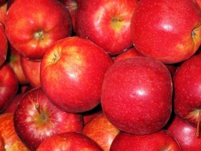 poma gala fruit nature