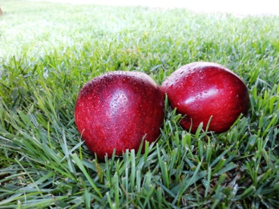 poma vermella americana fruit nature