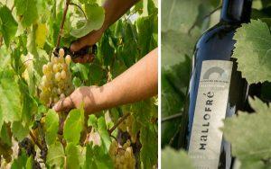 vins mallofre ecologic