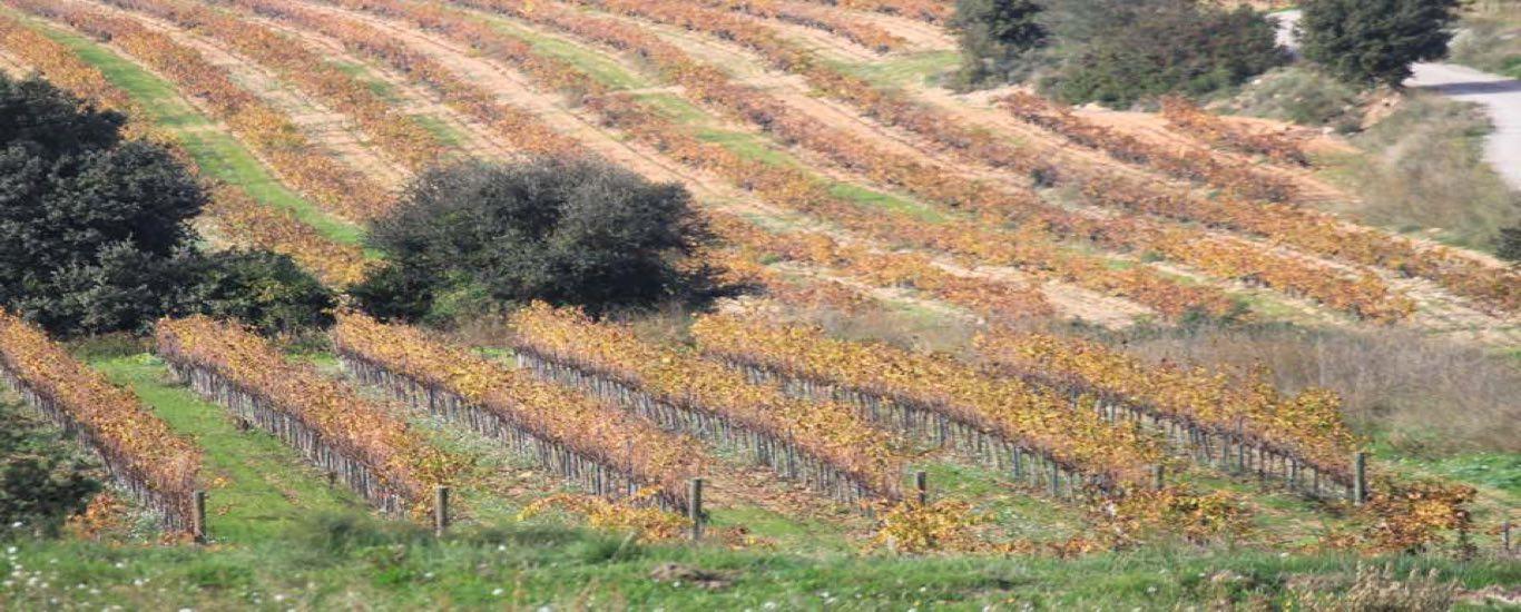 Vinos Mallofré