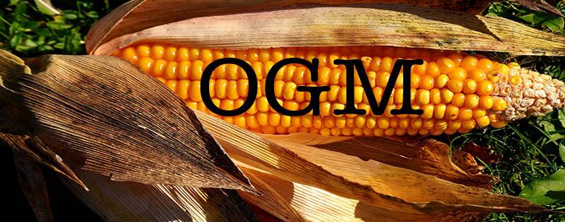 els aliments transgènics blog