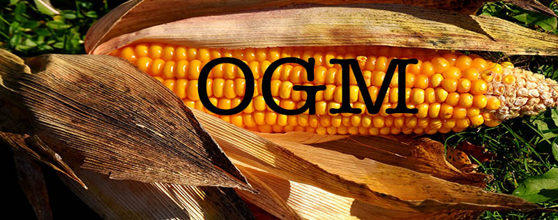 los alimentos trasngénicos blog